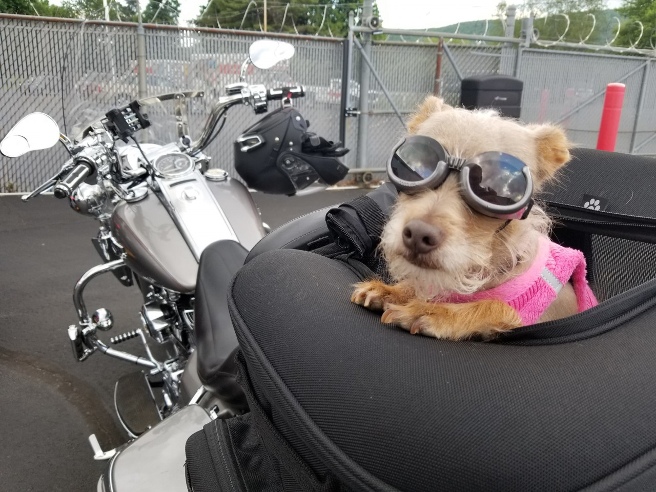 ride-with-dog